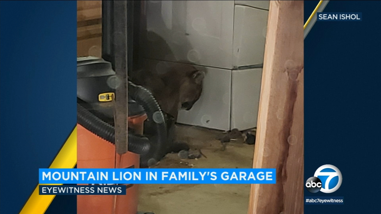 An Inland Empire family and their dogs had a brief, scary encounter with a mountain lion that they found hiding in their garage.