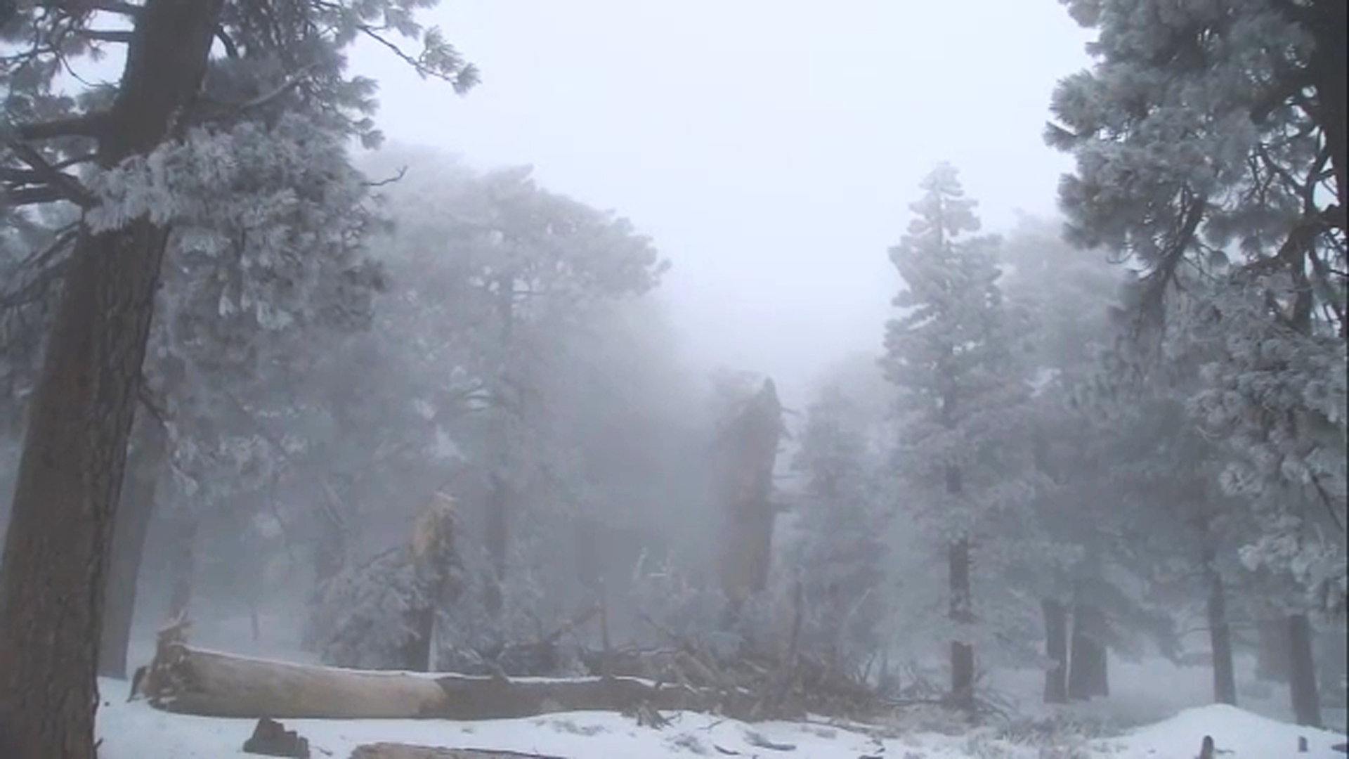 Fresh powder covers Wrightwood on Wednesday, Feb. 20, 2019.