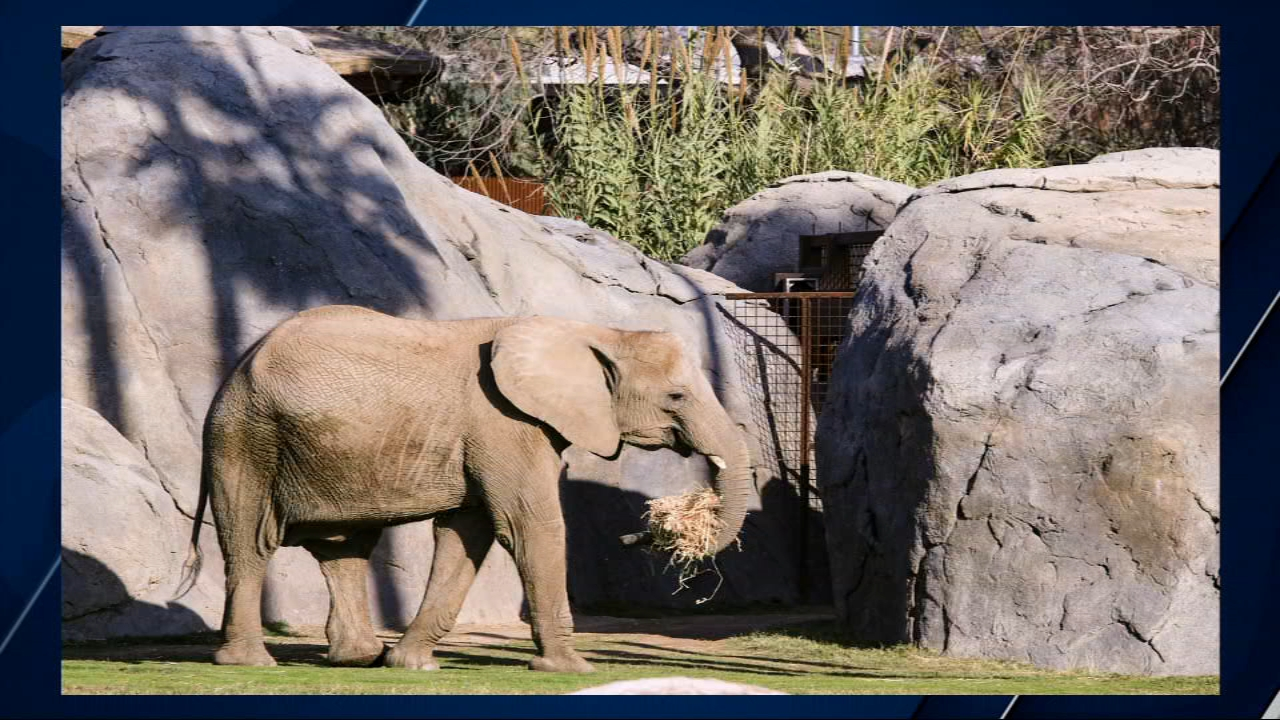 11-year-old female African elephant dies at the Fresno Chaffee Zoo