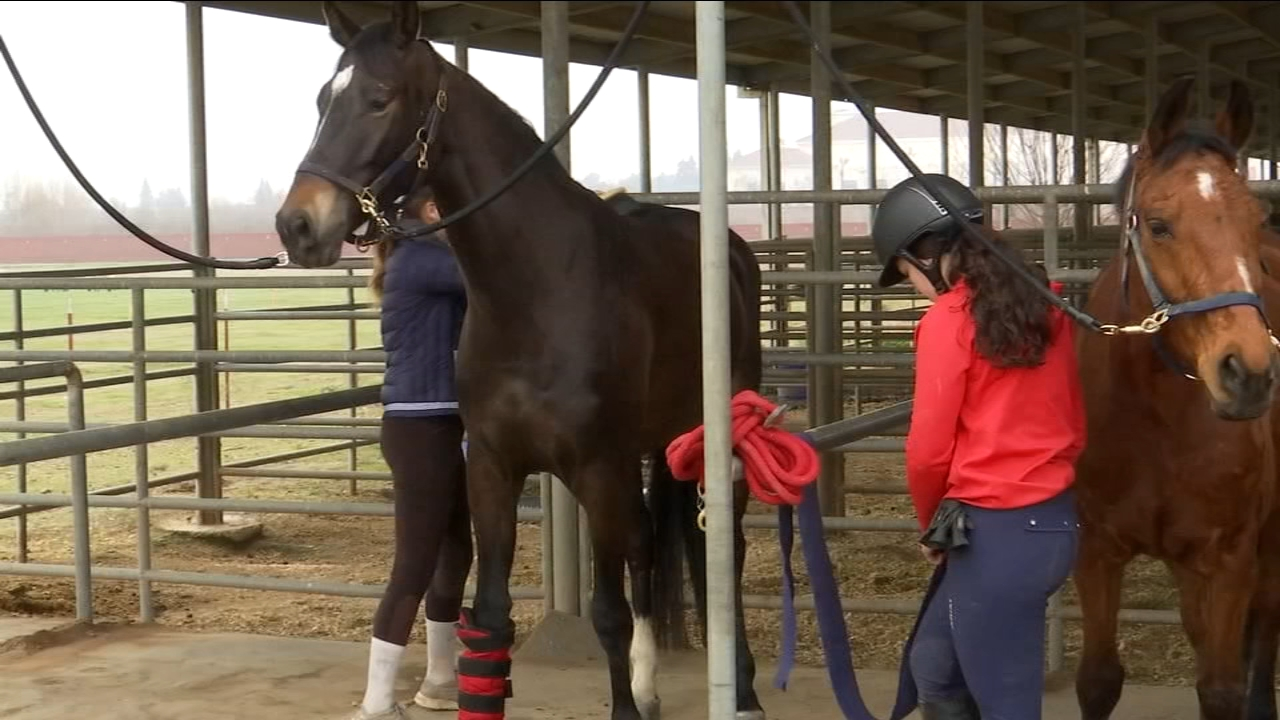 The equipment for the Fresno State equestrian team is a living, breathing, 1,000-pound animal.