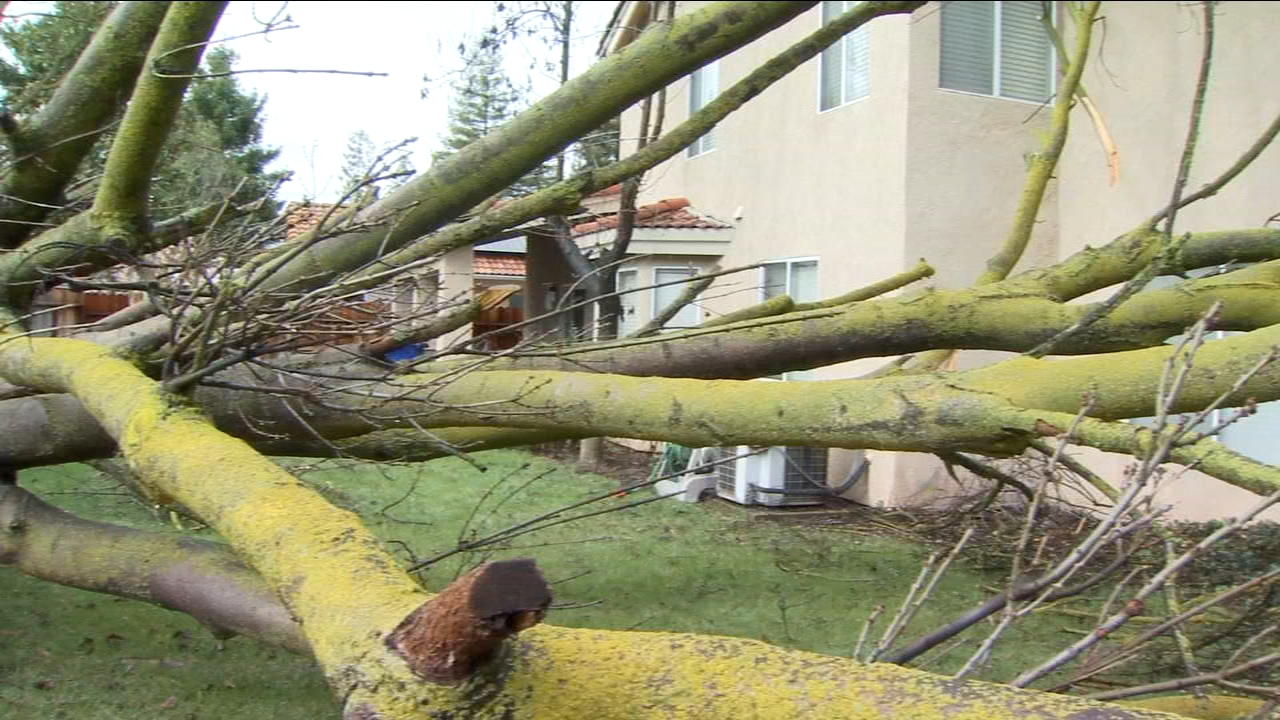 Uprooted trees could be seen in many parts of Fresno as more showers head towards the Valley.