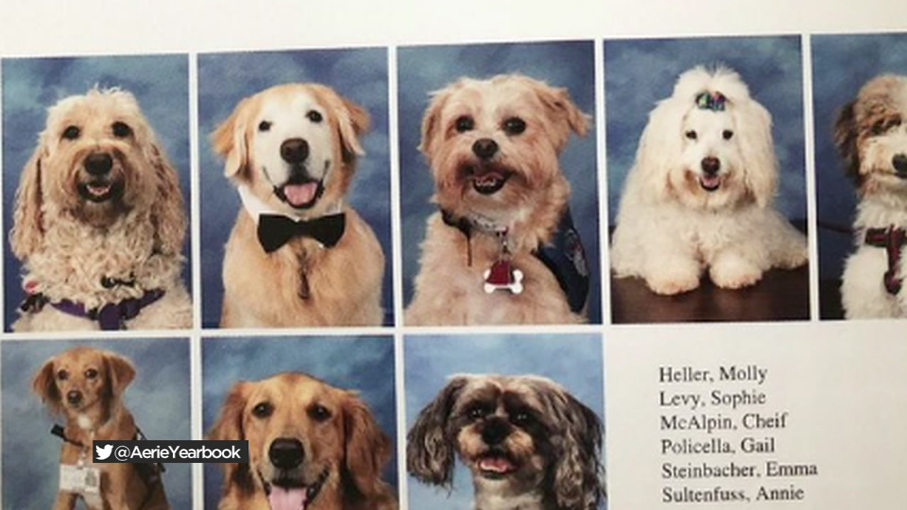 Parkland therapy dogs featured in school yearbook - ABC7 Chicago