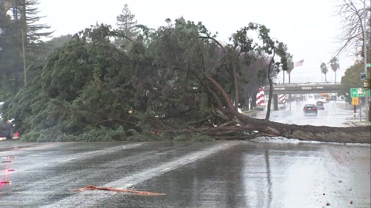 A tree fell across eastbound lanes of Hillsdale Avenue in San Jose, Calif. on Wednesday, Feb. 13, 2019.