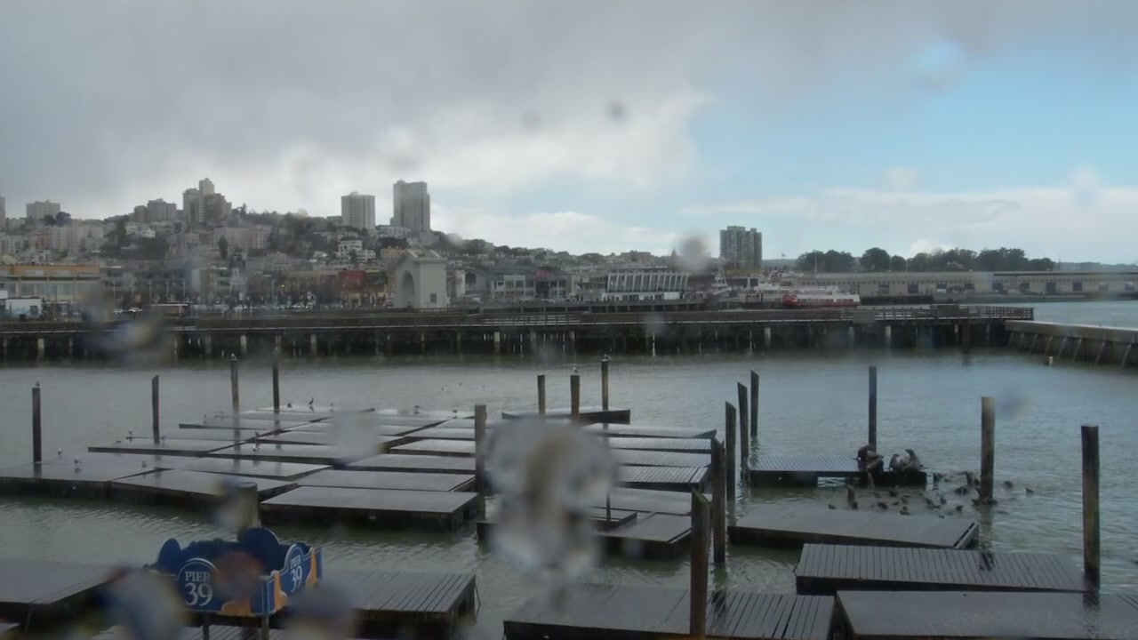 The sea lions at Pier 39 appeared to be trying to limit their exposure to a sudden hailstorm in San Francisco Friday afternoon.