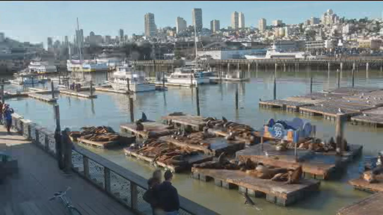 This image shows sea lions sunbathing at Pier 39 in San Francisco on Feb. 22.