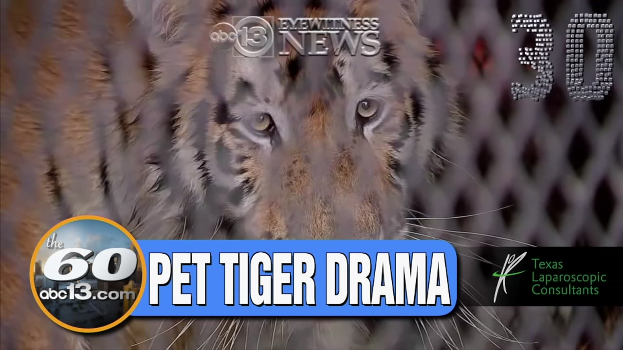 The 60: Person who went to smoke marijuana at house discovers tiger.