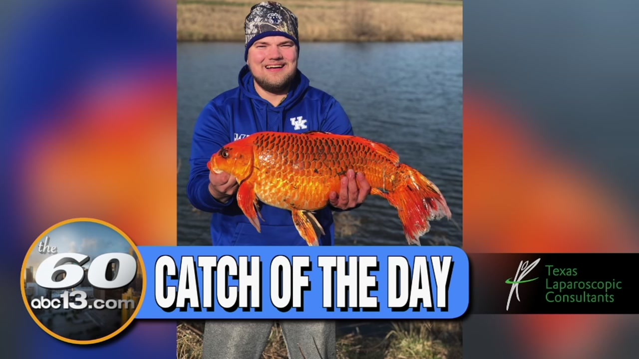 The 60: What a catch! Is this a regular fish or did one man just catch his overgrown pet goldfish?
