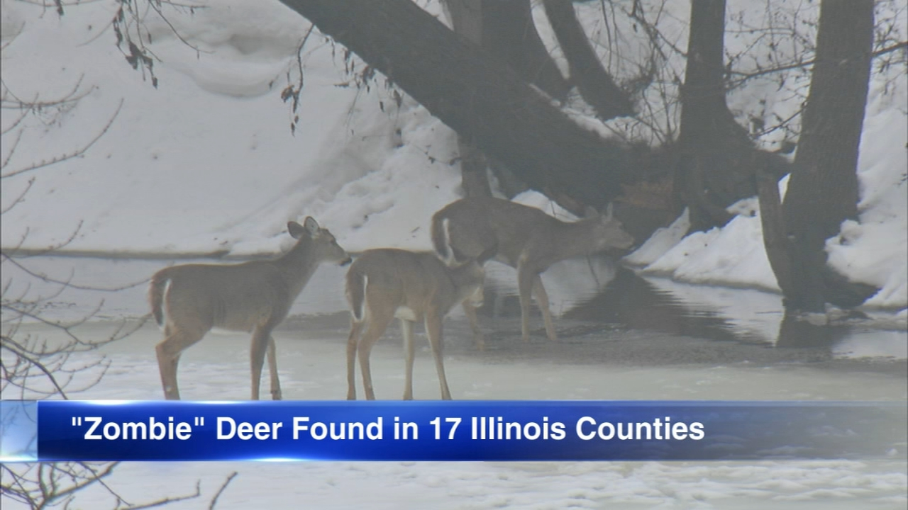 The Centers for Disease Control and Prevention is warning people about zombie deer.