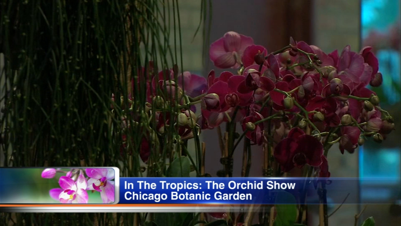 It may be cold outside, but its warm inside at the Chicago Botanical Gardens Orchid Show Greenhouses and Galleries.