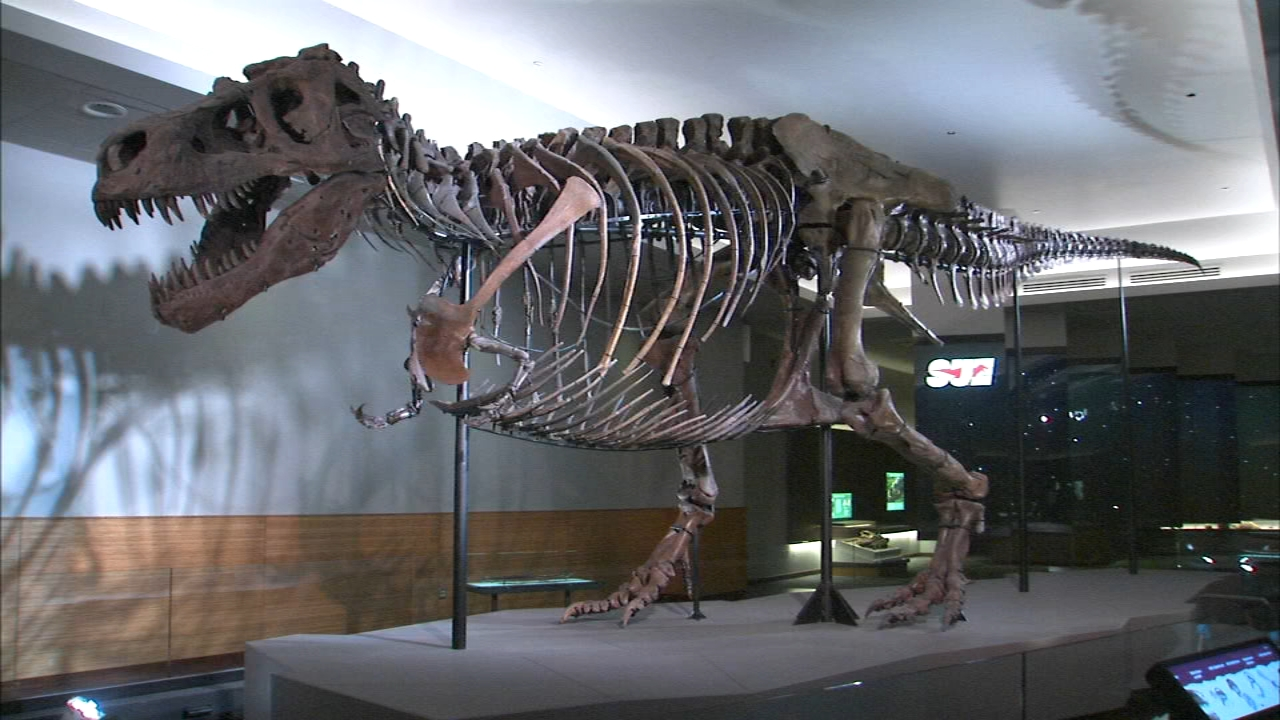 A group of researchers from Berlin removed leg and arm bones from Sue the T. Rex to perform CT scans.