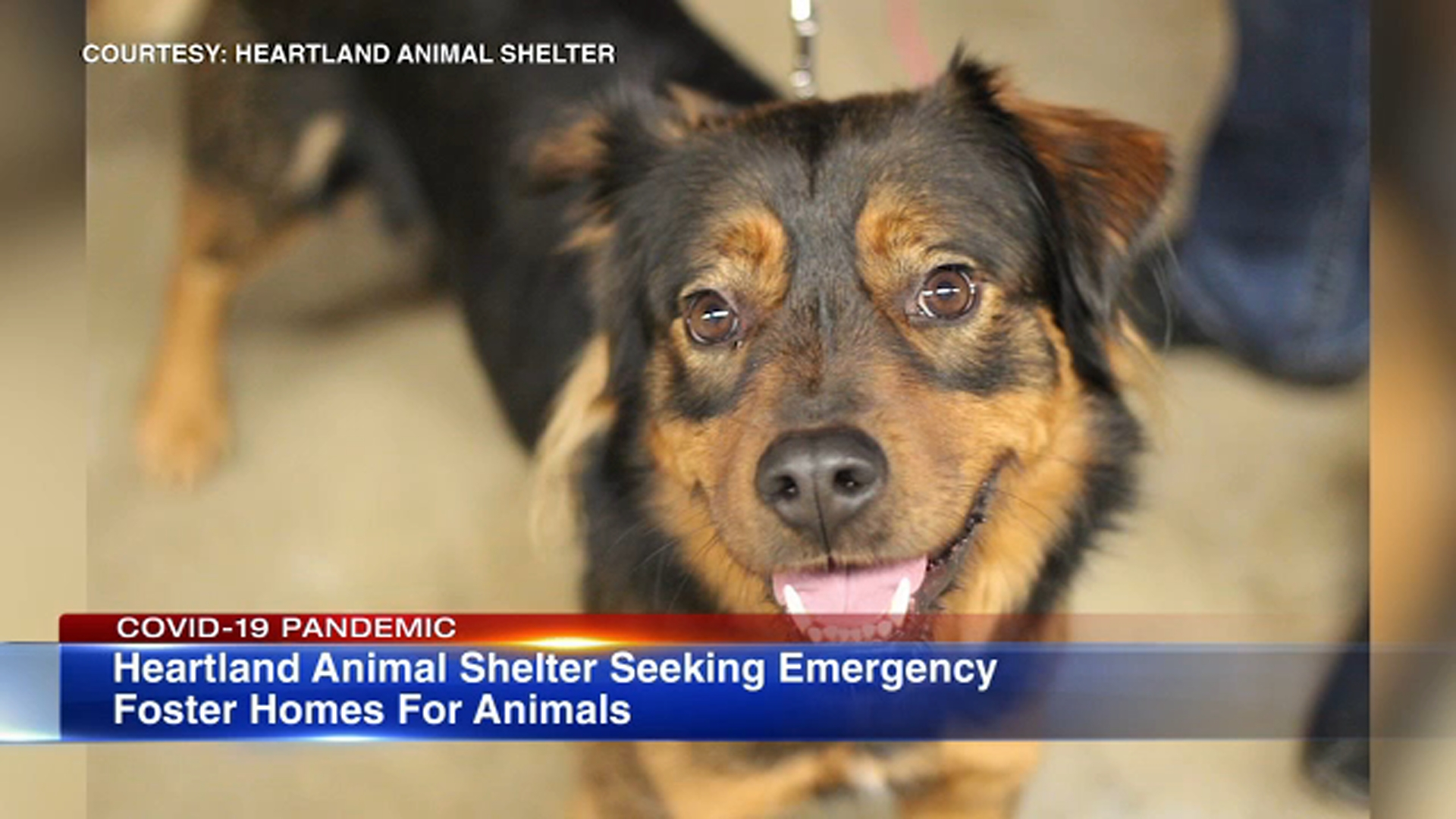 Heartland Animal Shelter seeks emergency foster parents, temporary ...