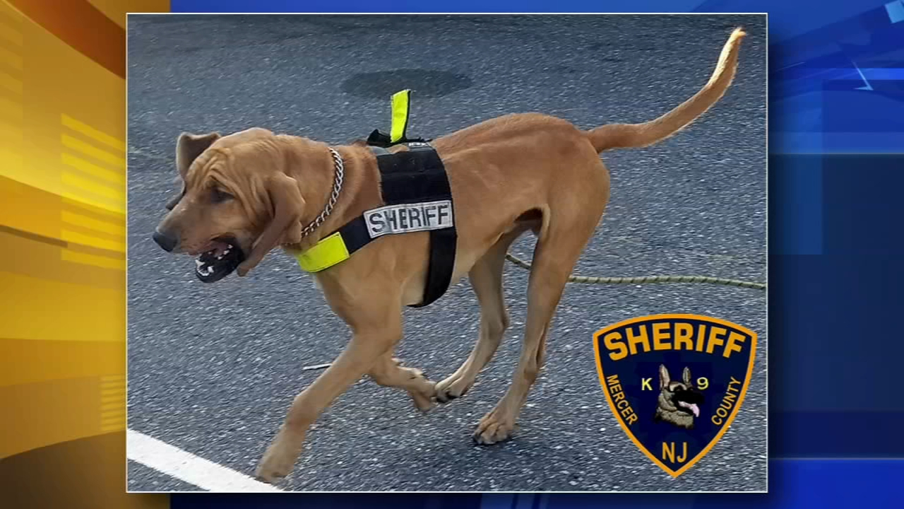 A police K-9 named Goose tracked down a missing woman in Robbinsville, New Jersey earlier this week.