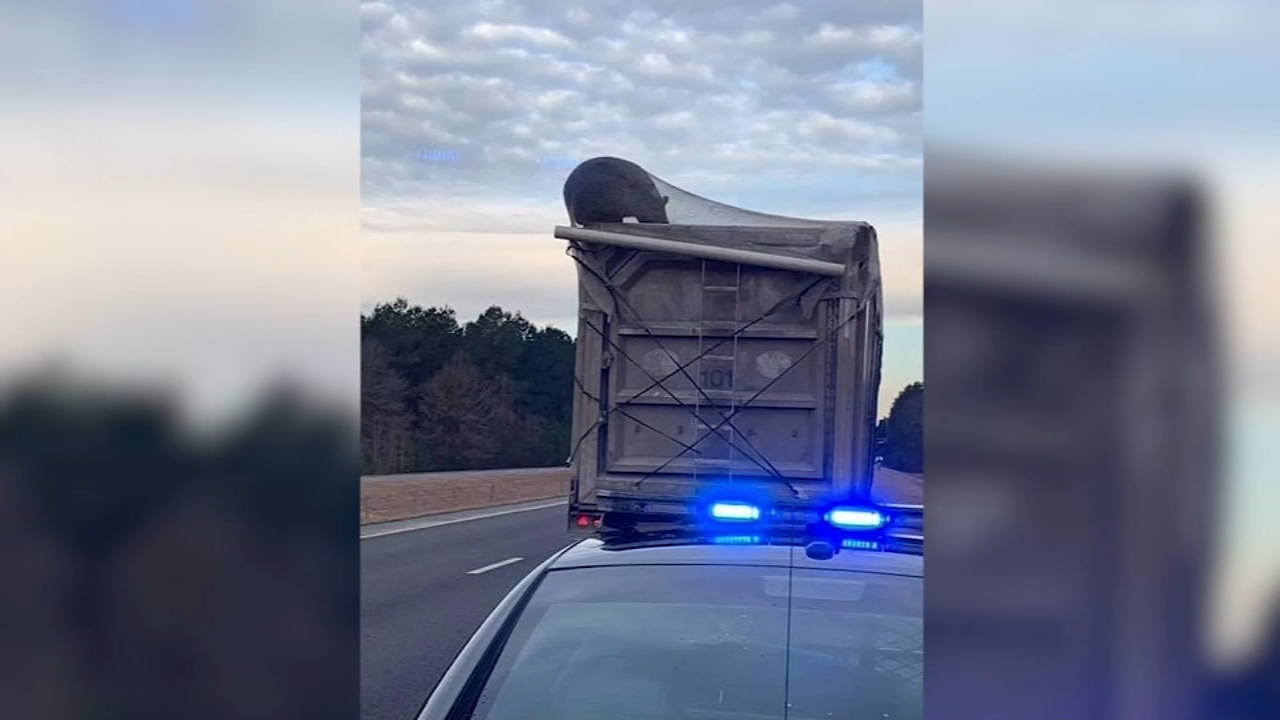 Bear caught on camera riding on top of garbage truck. Nydia Han reports during Action News at noon on February 17, 2019.