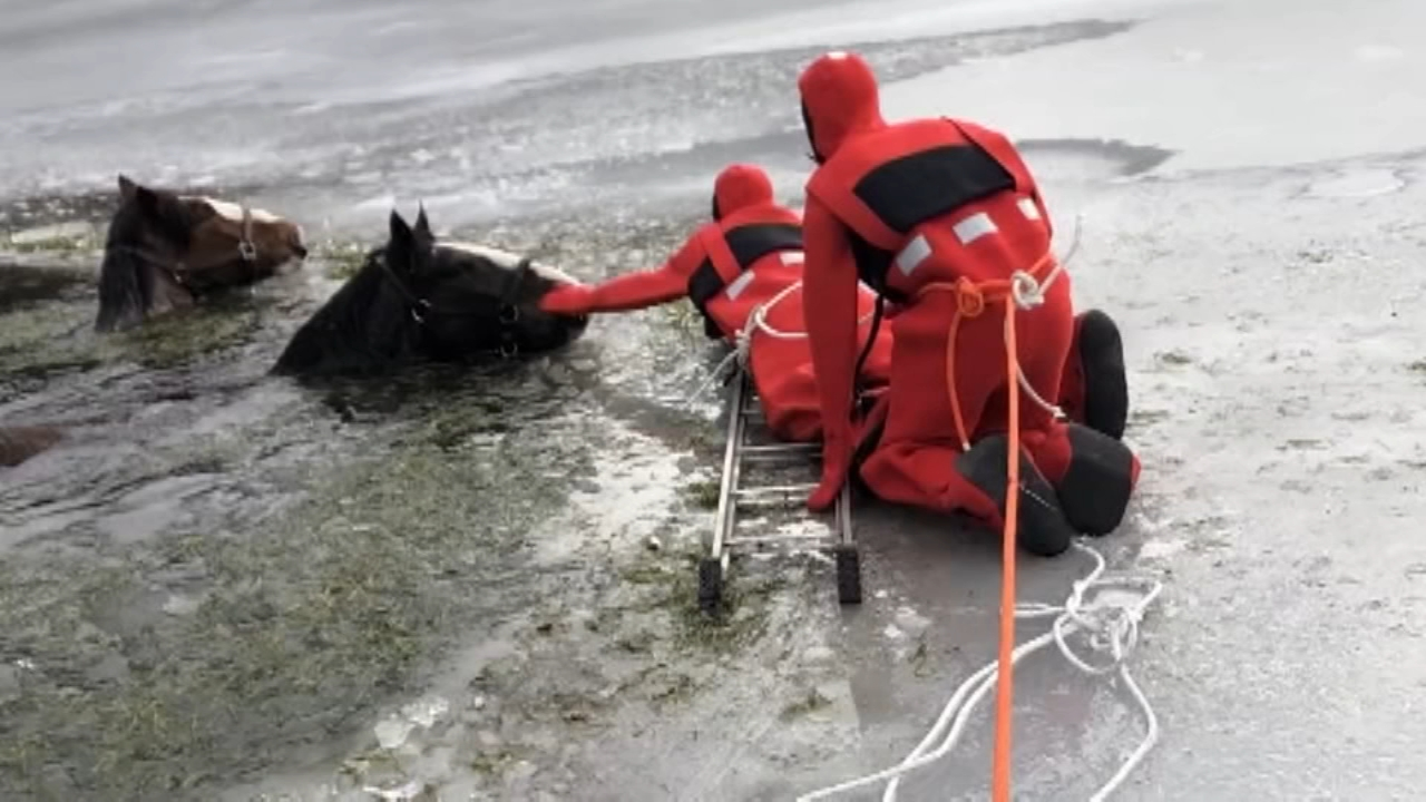 2 Clydesdale horses rescued from icy lake in Pennsylvania : as seen on Action News at 11 p.m., February 17, 2019
