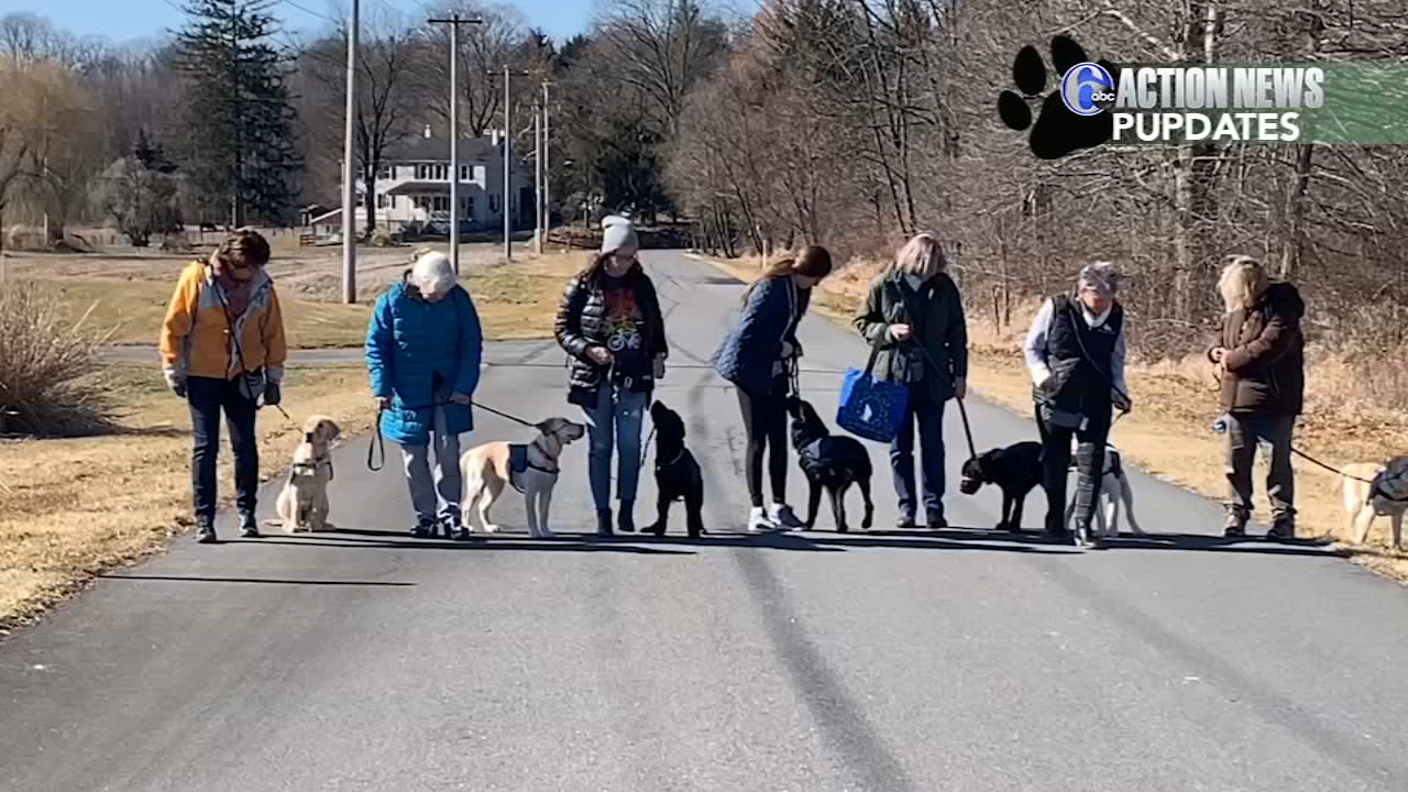 Action News Pupdates: Meet the puppy raisers, February 20, 2019.