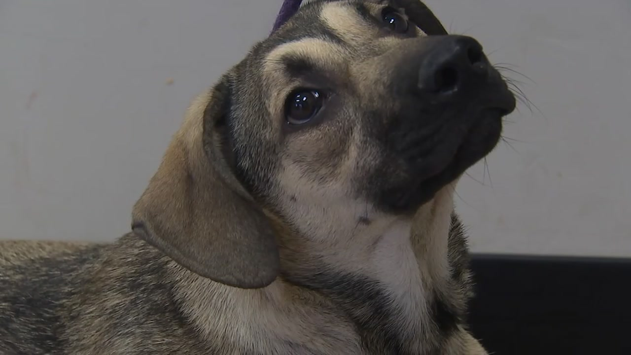 The Hoke County Animal Shelter is looking for people willing to adopt.