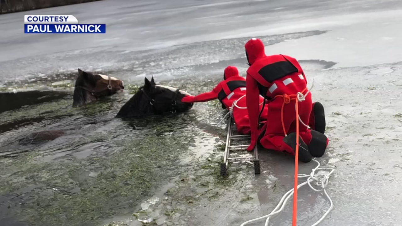 Crews were able to rescue two 15-year-old Clydesdale horses who wandered off a farm and into a frozen lake in Pennsylvania.
